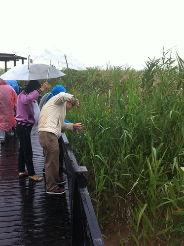 Chongming island - people catching small crabs