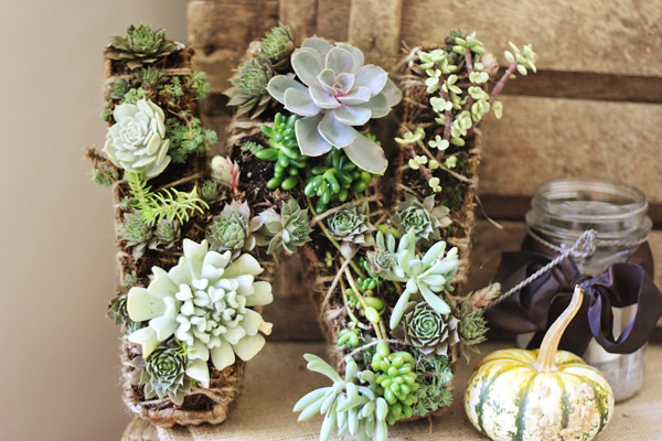 succulent wreath in wire frame