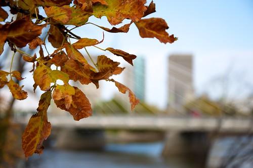 Winnipeg Autumn
