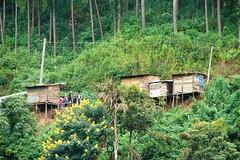 DSC00440 (jemawi) Tags: srilanka teaplantation 2010