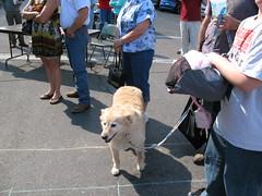 IMG_0793 (visit-prescott) Tags: plaza arizona dogs passages canine prescott 2011 dogtoberfest arizonapassages courhtouse