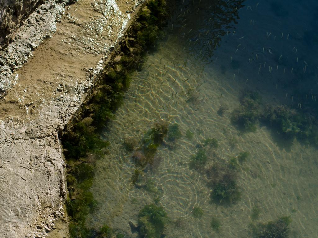 milieux aquatique