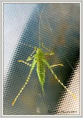 """Bug under glass"" (canaltowntraveler) Tags: elementsorganizer"
