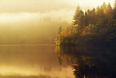 Solid Gold (Stuart Stevenson) Tags: uk trees mist rock sunrise photography scotland still lowlight earlymorning calm serene loch trossachs tranquil freshwater rollingin lochard clydevalley lateautumn canon70300mm autumngold scotchmist thanksforviewing canon