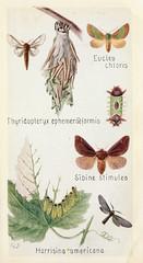 Anglų lietuvių žodynas. Žodis sibine reiškia Sibinas lietuviškai.
