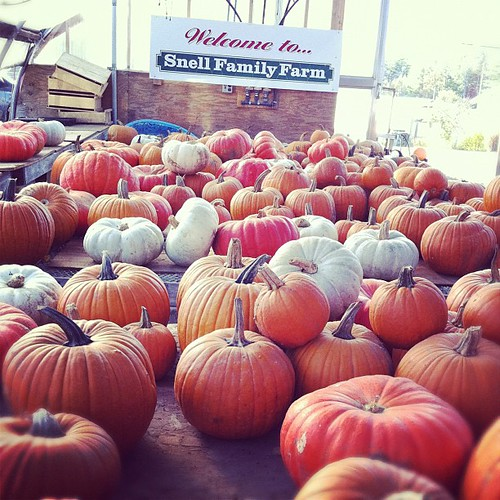 pumpkins at local family farm
