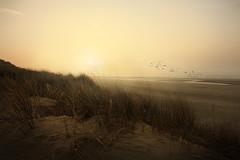Par une fin d'aprs-midi brumeuse (Ludovic Cadet Photo) Tags: sunset mer mist beach canon soleil day dunes clear plage brume oiseaux merdunord