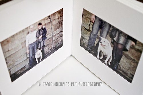 3.twoguineapigs pet photography new product offering, custom pet portraiture