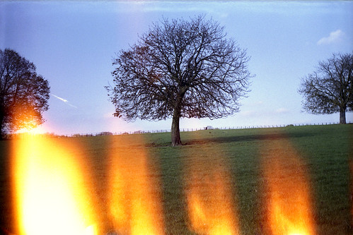 Horse Chestnut with light leaks by pho-Tony