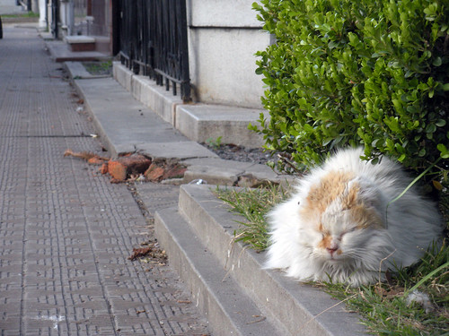 Sleepy Cat in Recoleta Cemetery