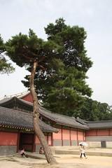 往時をしのぶ / Palace in Seoul