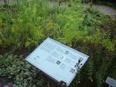 Im Kräutergarten von Bad Marienberg