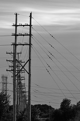 Wires and Pole DSC_1433 (Mully410 * Images) Tags: blackandwhite monochrome wire powerlines telephonepolls ricecreek ricecreekregionalpark
