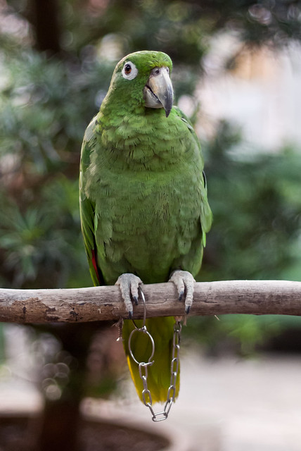 I am Parot