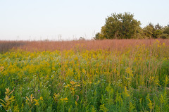 Prairie in full color Photo