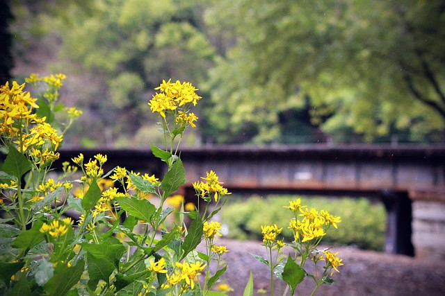 flowers and the c&o railroad