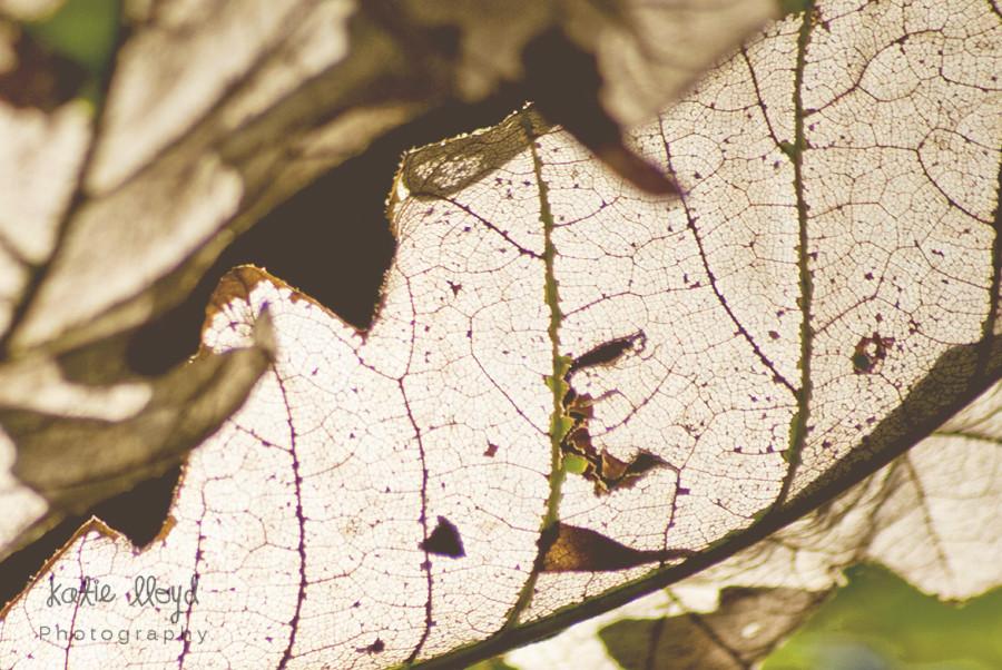 skeleton-leaf