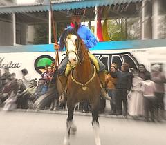 20 de Setembro (Eliana Lcio) Tags: horse caballo desfile cavalo riograndedosul gacho arroiogrande