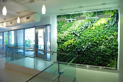 NRDC-DC's green living wall (by: Matt Cohen, courtesy of NRDC)