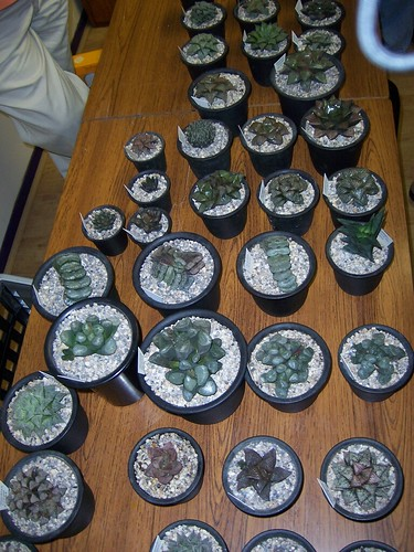 September Meeting - Haworthias with Stirling Baker