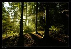 Lumière du matin dans la foret de mon village hommage a l'automne qui arrive a grand pas (francky25) Tags: de la village lumière grand du arrive mon hommage pas foret dans qui matin doubs comté franche lautomne alaise
