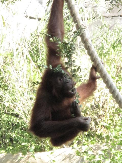 Zoo 0350