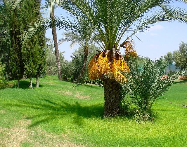 La végétation marocaine