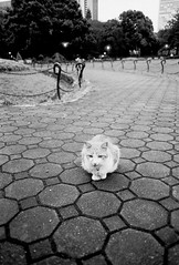 A cat in Hibiya Park.
