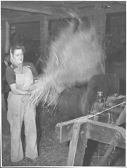 Land Army girl winnowing flax at the Drouin flax mill, Drouin, Victoria (National Library of Australia Commons) Tags: woman blur standing work farm working machine overalls flax kerchief winnowing nationallibraryofaustralia landarmy xmlns:dc=httppurlorgdcelements11 dc:identifier=httpnlagovaunlapican24354207