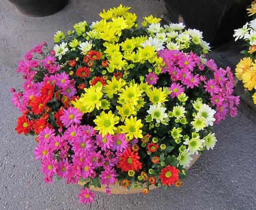 Töölön kukkakauppa by Anna Amnell