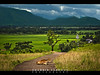 The Road I call home (Shabbir Ferdous) Tags: road travel blue mountain color green art beautiful field sign clouds landscape cow photo photographer view place shot paddy picture dramatic atmosphere colourful cheerful capture sylhet bangladeshi shabbirferdous canoneos1dmarkiv wwwshabbirferdouscom shabbirferdouscom ef70200mm28lisiiusm