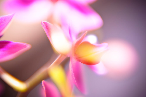 Some DoF Orchid Love | side