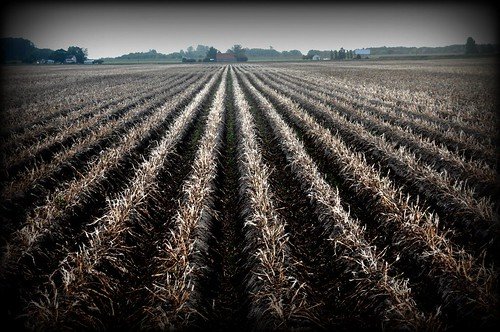 09/23/11 Rows and Rows by roswellsgirl