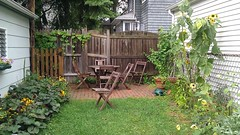 The garden, before