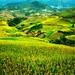 Lapantan - Mucangchai - Vietnam (Explore)