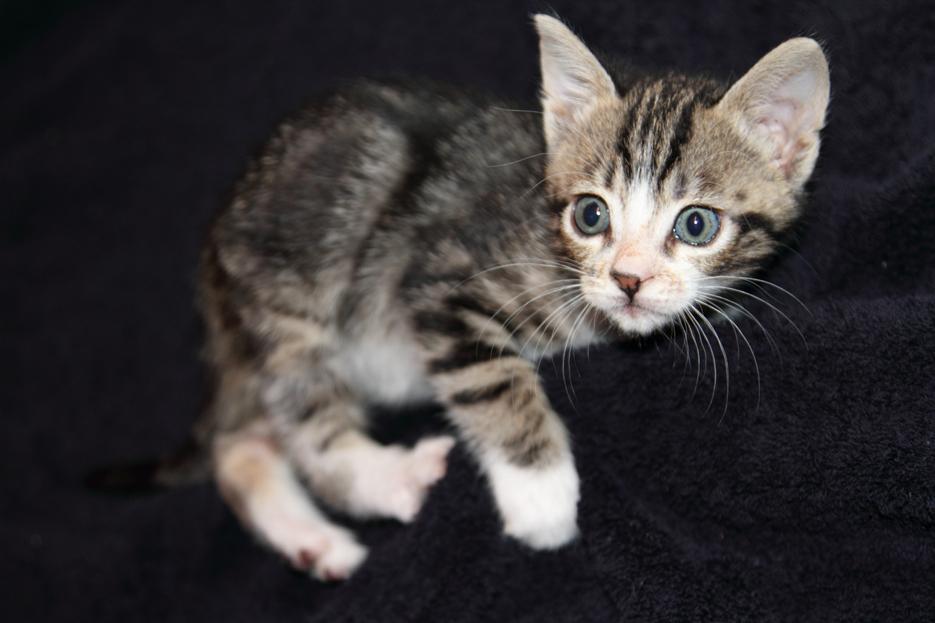 092111_kittens04