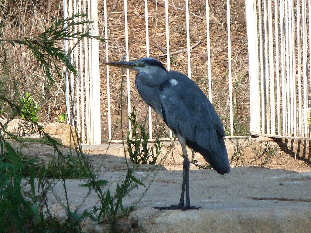25-09-2011-heron-other-kind2