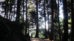 檜山巨木群林道
