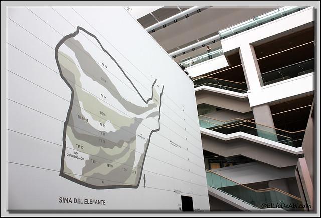 Museo Evolución Humana 35
