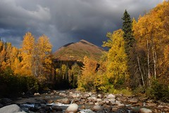 Alaska  On September 26, 2011 (MarculescuEugenIancuD5200Alaska) Tags: alaska sublimemasterpiece fleursetpaysages