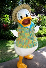 Donald Duck at Disney's Aulani Resort