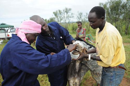 VETCAP Uganda, September 2011