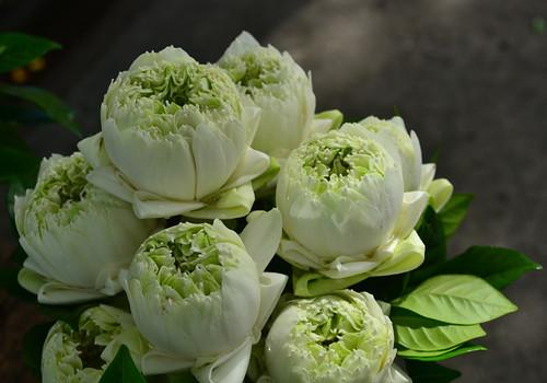 5 lotus flower