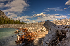 Gone, but not forgotten (JoLoLog) Tags: trees canada clouds branches joe alberta rockymountains hdr kananaskiscountry deadtrees canadianrockies lowerkananaskislake canonxsi mygearandme mygearandmepremium mygearandmebronze mygearandmesilver mygearandmegold mygearandmeplatinum mygearandmediamond artistoftheyearlevel4 4timesasnice