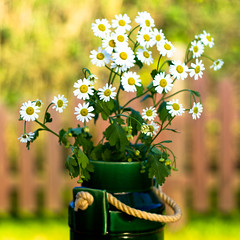 there is still summer (koworu) Tags: life autumn stilllife white flower love canon germany stillleben still bokeh 7d daisy language blume liebe weis 2011