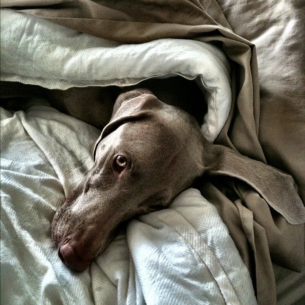 A weim in camouflage