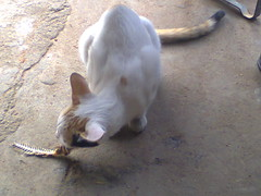 Know your costomer..! (mvr.niranjan) Tags: new dog baby cat nice funny good sleep communication management fault excellent worry hurry popular stress recent consumer skill mostviewed hasty nonverbalcommunication mostseen marvolleous