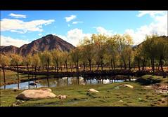 A view in Shakti villege near Chemery Monastery. (P_a_r_a_m) Tags: india leh ladakh gettyimagesindiaq4
