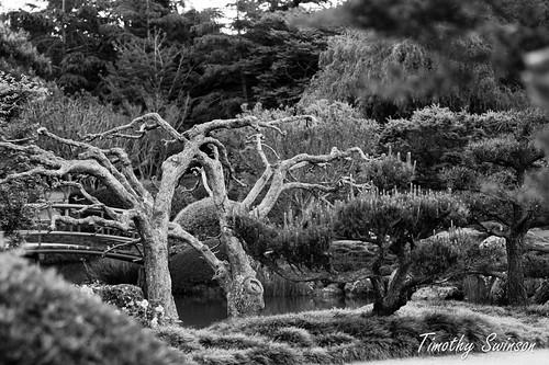 Toowoomba Japanese Gardens-8