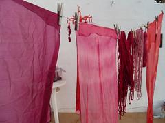 Teñido solar cochinilla Lanzarote Oct11 028 (lanzarote rural) Tags: color lana lanzarote seda cochineal cochinilla naturaldye cochenille tintenatural teñidosolar